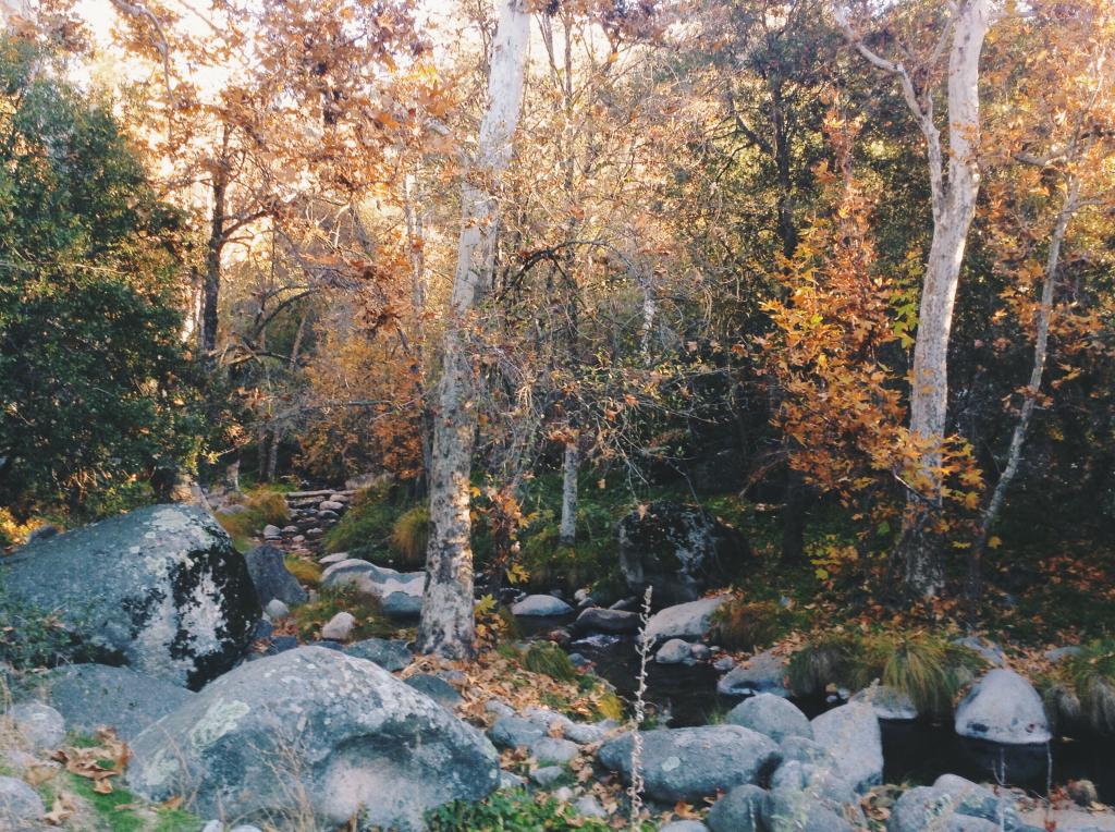 california sequoia forest