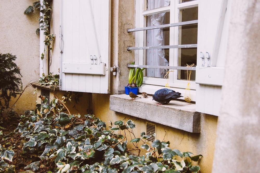 Wandering Wednesdays, Paris / French Californian