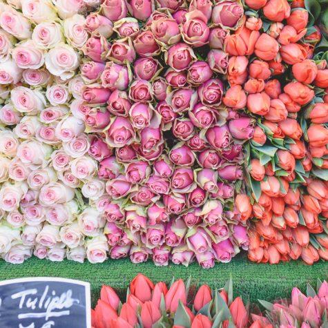 portfolio-flowers-hwilson-4