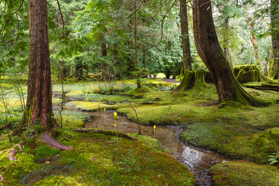 The Pacific Northwest | French Californian