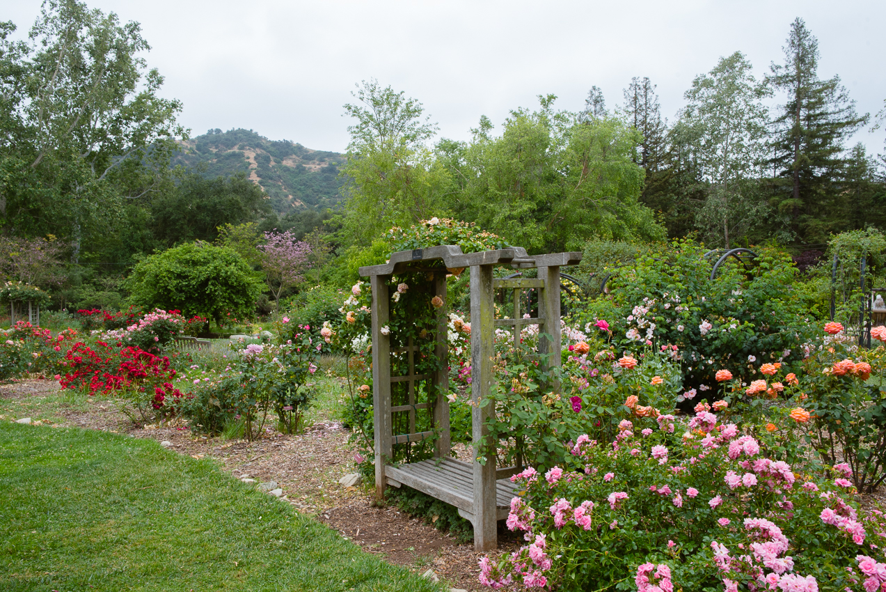 Descanso Rose Garden in Spring