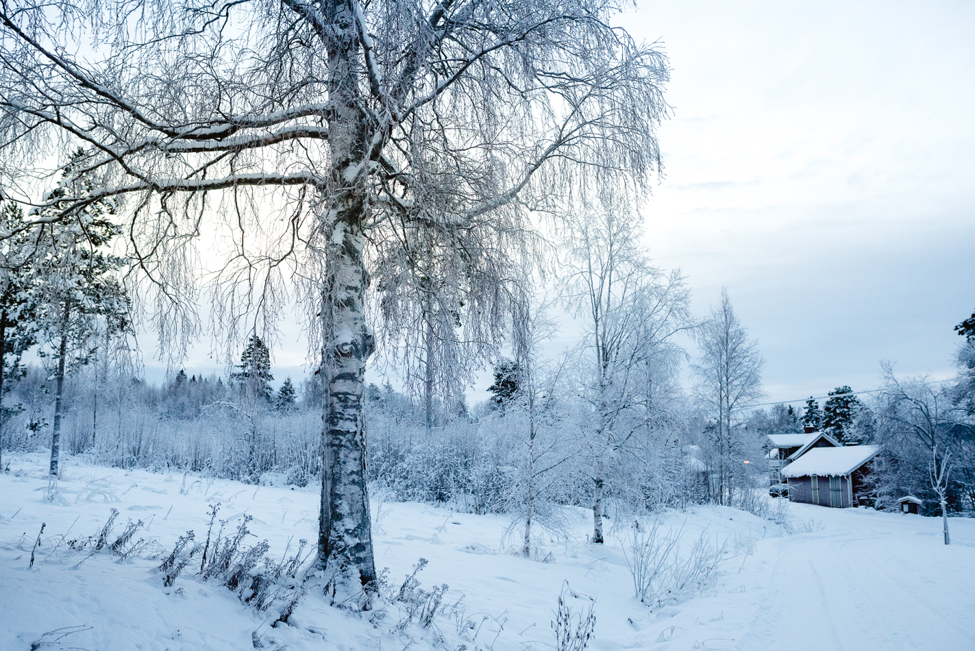 sweden-snow-blog-hannah-wilson-2